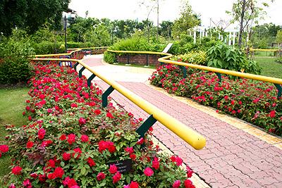 ทางเดินในสวนพระมหากรุณาธิคุณ เพื่อผู้พิการทางสายตา