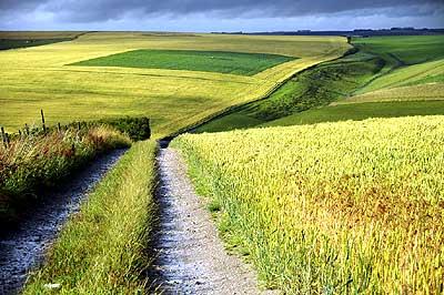 ทุ่งหญ้าอันกว้างใหญ่ในที่ราบ Salisbury