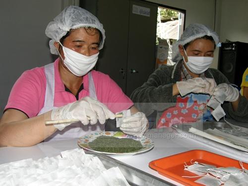 กลุ่มแปรรูปผลิตภัณฑ์ชาข้าวสาลีบ้านผาคับ อ.บ่อเกลือ จ.น่าน มีรายได้เพิ่มจากการปลูกข้าวสาลีและทำชาข้าวสาลี
