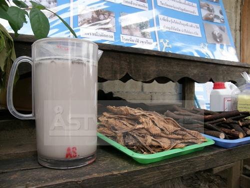 รากหางไหลและสารสกัดจากรากหางไหลที่ชาวบ้านก็ทำเองได้ไม่ยาก