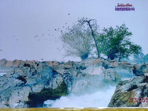 รูปถ่ายอีกมุมหนึ่งของต้นมณีโคตร