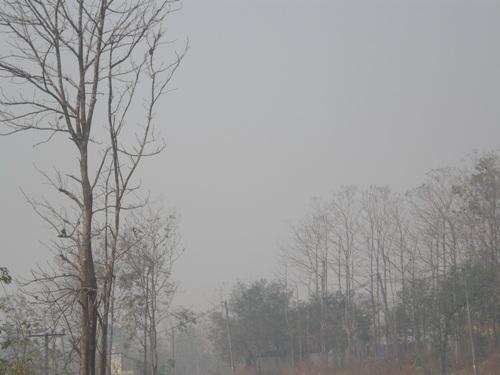 คุมเข้มผืนป่าตาก 2.5 แสนไร่ คาดโทษคนเผา จำคุก-ปรับสูงสุด