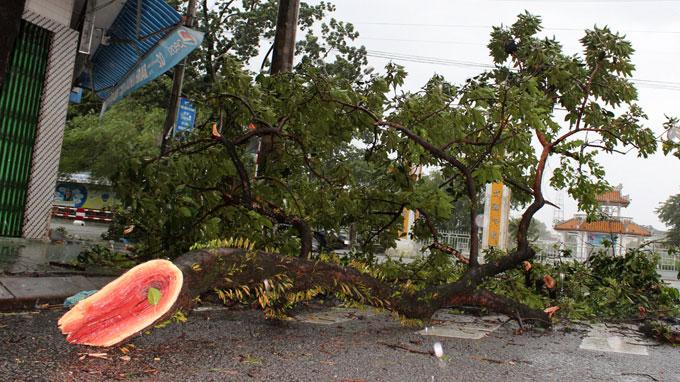 <bR><FONT color=#000033>ต้นไม้หักโค่นลงจำนวนมากในนครเหวสร้างความยากลำบากให้แก่การสัญจร ยังมีรายงานเหตุการณ์คล้ายกันนี้ในเมืองโด่งเฮย จ.กว๋างบี่ง และ จ.เหงะอานที่อยู่สูงขึ้นไป ฝนยังคงตกทั่วไปในภาคกลางตอนบนเวียดนามวันจันทร์นี้ ขณะไต้ฝุ่นหวูติ๊บกำลังจะพัดเข้าฝั่งในตอนบ่าย.   -- ภาพ: TTO </b>