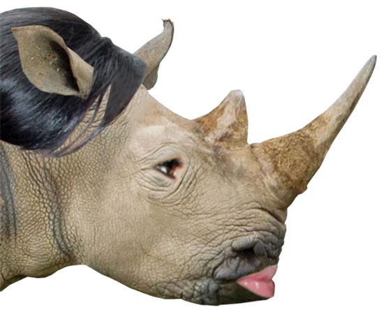นักสัตววิทยาพิสูจน์แล้ว แรดไทยหนังหนากว่าแรดแอฟริกา