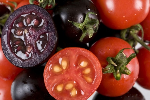 มะเขือเทศสีม่วงที่เกิดจากการดัดแปรพันธุกรรมหรือจีเอ็ม เพื่อให้มีสารแอนโธไซยานินเช่นเดียวกับพืชตระกูลเบอร์รี (ภาพจาก http://www.naturaleater.com)