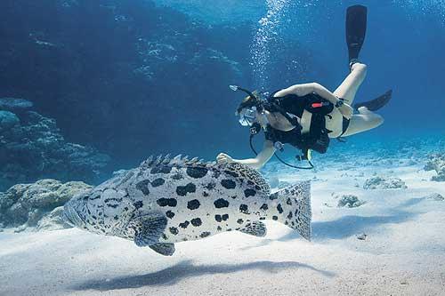 """บรรยากาศ โลกใต้น้ำ """"ออสเตรเลีย"""" (ภาพ : เว็บไซต์ agoda)"""