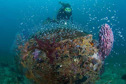 """ปะการังสวยงาม  """"โคตา คินาบาลู"""" (ภาพ : เว็บไซต์ agoda)"""