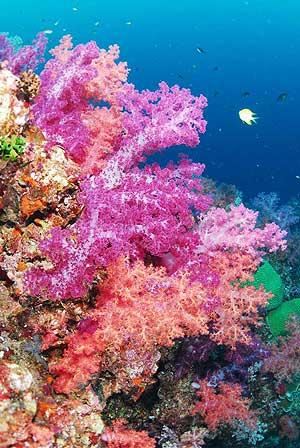 ดำดิ่งสู่สวรรค์ใต้ทะเลไทย กับ 5 จุดดำน้ำชื่อดังแห่งอันดามัน