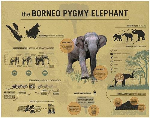 ข้อมูลต่างๆ เมื่อเทียบกับญาติๆ ช้างสายพันธุ์อื่น (ภาพ : เว็บไซต์ behance.net )
