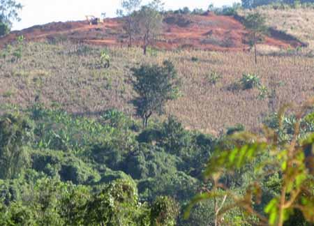 พื้นที่ป่าในจังหวัดเลยถูกบุกรุกแผ้วถางมาอย่างต่อเนื่อง