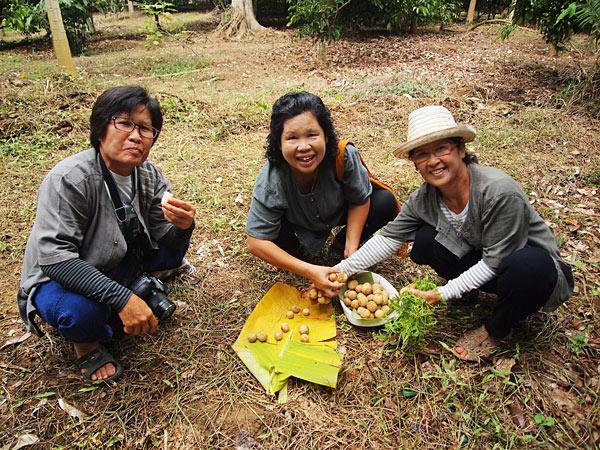 ป้าเสงี่ยม (กลาง) และเพื่อนๆ ช่วยกันเก็บผลไม้