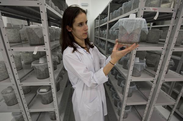 โซเฟีย ปินโต นักวิจัยผู้นำชมห้องปฏิบัติการเพาะยุงจีเอ็ม ถือดถบรรจุยุง