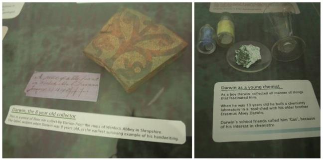 คอลเลคชันเริ่มแรกของชาร์ลส ดาร์วิน สมัยเด็กๆ เป็นเศษกระเบื้องเขียนสีที่พบข้างบ้าน ที่เขาเก็บเป็นหมวดหมู่และเขียนป้ายกำกับไว้ตั้งแต่ 8 ขวบ