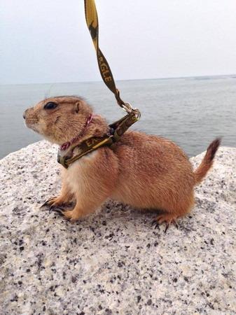 แอบพาไปเที่ยวทะเล