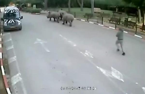 """[ชมคลิป] แรดจริงๆ! """"ริฮานนา"""" ควงเพื่อนหนีออกจากสวนสัตว์"""