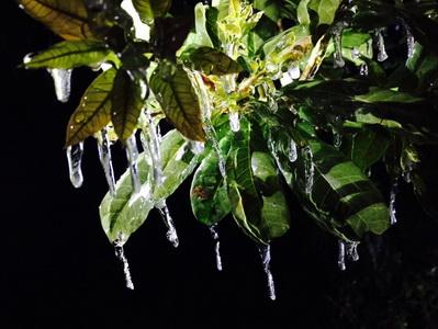 """ตะลึง! ดอยอินทนนท์เกิด """"หยดน้ำค้างแข็ง"""" หลังอุณหภูมิต่ำกว่าจุดเยือกแข็ง (ชมคลิป)"""