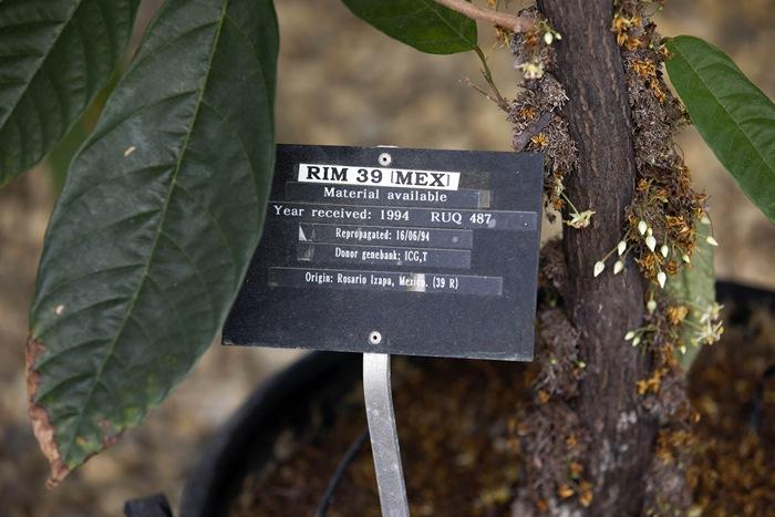 แผ่นป้ายแสดงถิ่นที่มาของพันธุ์โกโก้ภายในศูนย์ควบคุมโกโก้นานาชาติที่อยู่ในอังกฤษ (AFP PHOTO / JUSTIN TALLIS)
