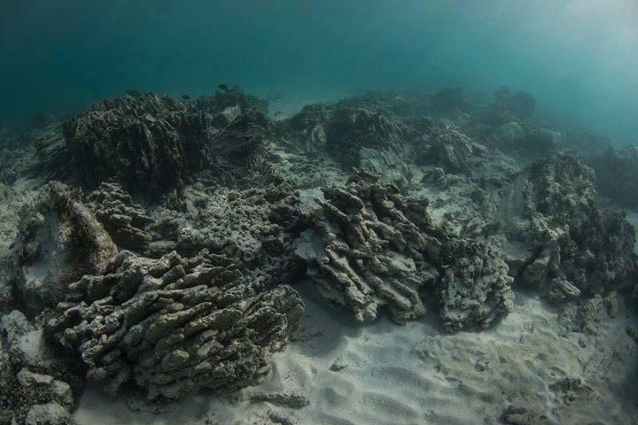 """ดร.ธรณ์ เผยภาพปะการังตายซาก """"เกาะตาชัย-สิมิลัน"""" ชี้ควรจำกัดจำนวนนักท่องเที่ยวเกาะตาชัย"""