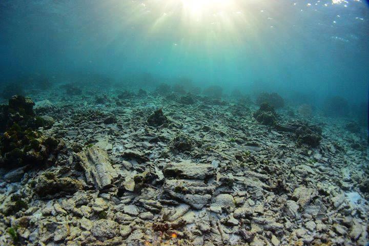 ภาพซากปะการัง เกาะตาชัย-สิมิลัน จากเพจ Thon Thamrongnawasawat