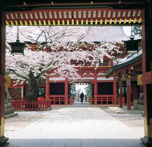 ซากุระบานที่ฟูกุชิมะ