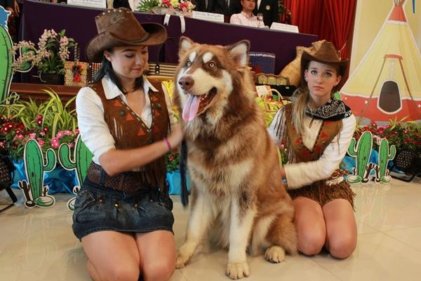 คาวเกิร์ลและเจ้าคุกกี้รัน สุนัขสายพันธ์ใหญ่