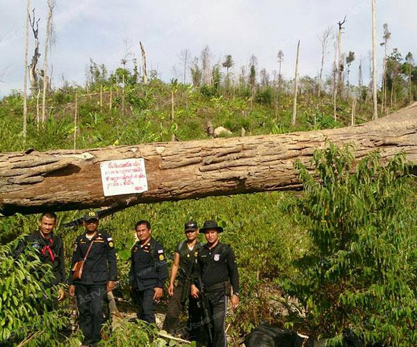 ป่าไม้ยะลาวิกฤต! พบป่าสงวนแห่งชาติถูกบุกรุกอีกกว่า 200 ไร่ เสียหายกว่า 30 ล้าน