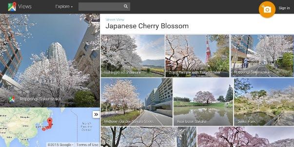 กูเกิลให้บริการชมซากุระบานออนไลน์