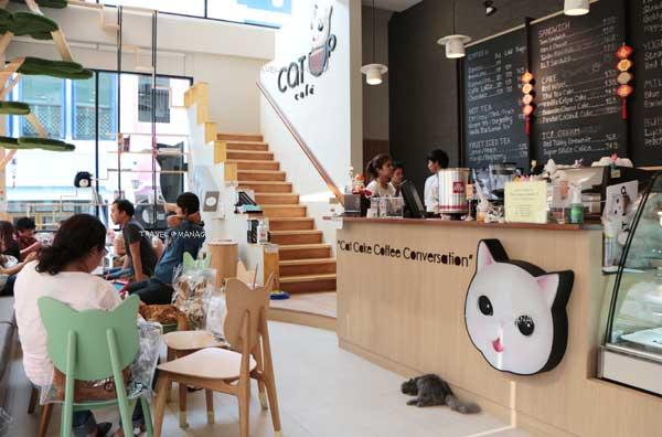 """""""Cat Up Café"""" คาเฟ่แมวสุดชิค ฮอตฮิตของทาสเหมียว"""