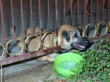 กู้ภัยช่วยสุนัขคอติดประตูเหล็ก คาดหาทางมุดเข้าบ้าน