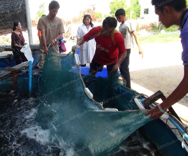 สถาบันวิจัยฯ สงขลา เลี้ยงปลากะพงระบบปิด เน้นเพิ่มผลผลิตแถมต้นทุนต่ำ