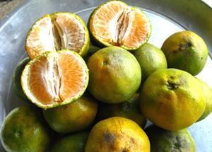 """""""ฟื้นส้มบางมด-ปั้นสตรอเบอรี่นาแห้ว"""" มจธ. จัดเต็มเทคโนโลยีสร้างพืชมูลค่าสูง"""