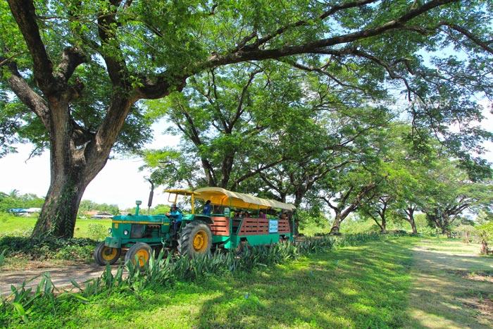ไร่กำนันจุลมีรถรางบริการนำเที่ยวชมไร่ แปลงปลูกผลไม้อันหลากหลาย