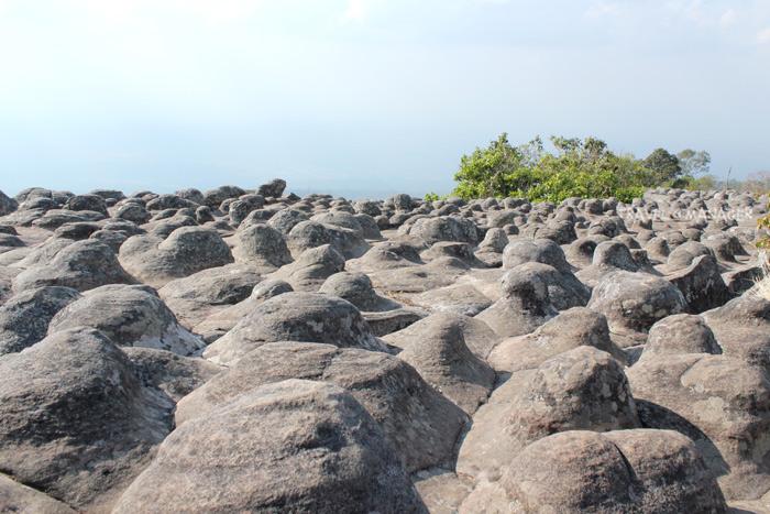 ลานหินปุ่มแห่งภูหินร่องกล้า