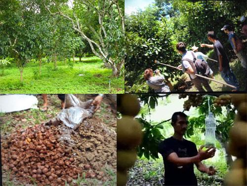 ชาวสวนคุณรัฐไท สาธิตการทำปุ๋ยหมัก ปุ๋ยอินทรีย์ และสารกำจัดศัตรูพืชด้วยสมุนไพร