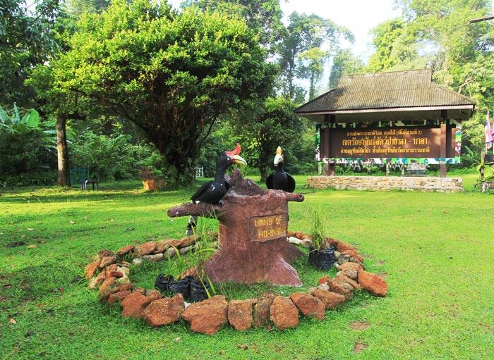 ป่าฮาลา-บาลา ป่าดงดิบอันอุดมสมบูรณ์ที่มีนกเงือกอาศัยอยู่จำนวนมาก