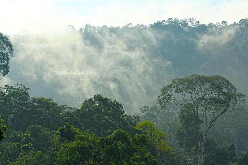 ป่าบาลา-ฮาลา ใน อ.แว้ง อ.สุคิริน เปิดให้ผู้สนใจเข้าเที่ยวชม