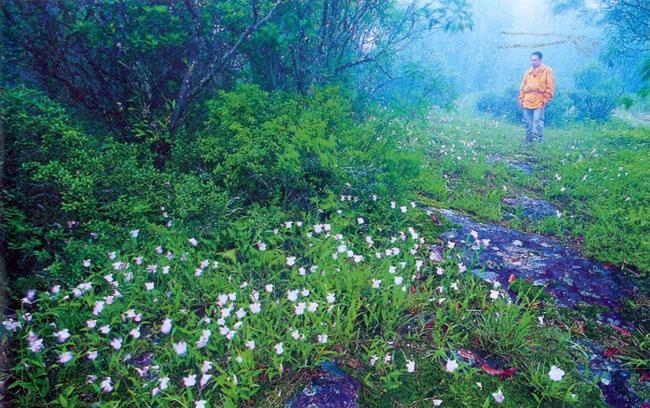 """""""5 ดอกไม้หน้าฝน"""" สวยเหมือนฝัน กาลครั้งนั้น...ความฝันผลิบาน"""