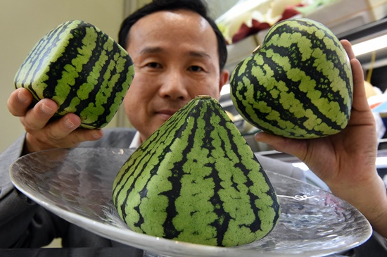 Square fruit: Odd shaped melons herald Japan summer