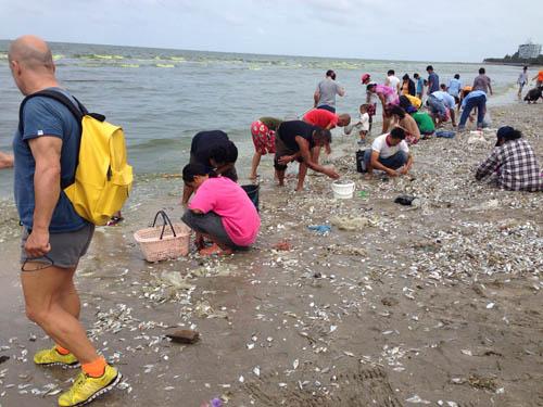 ชาวบ้านและนักท่องเที่ยว แห่เก็บซากปลา นำไปปรุงอาหาร
