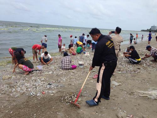 ด้านเทศบาลฯ สั่งเจ้าหน้าที่เร่งเก็บซากปลาดังกล่าว โดยด่วน