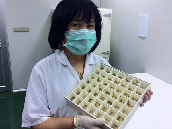 กล่องเลี้ยงหนอนกระทู้ แหล่งผลิตไวรัสเอ็นพีวีชั้นดี