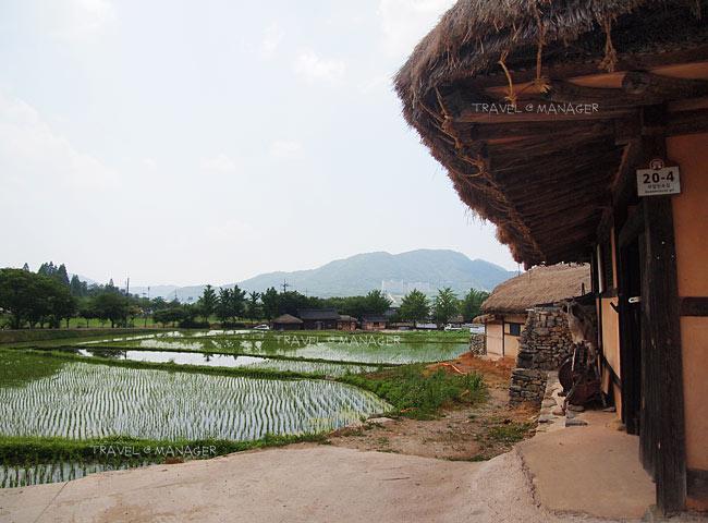 ภายในหมู่บ้านยังปลูกข้าวและทำเกษตรกรรม
