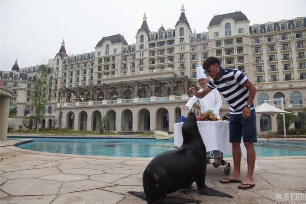 เศรษฐีจีนตังค์เหลือ ปิดสระว่ายน้ำโรงแรมห้าดาว ฉลองวันเกิดให้ 'สิงโตทะเล'