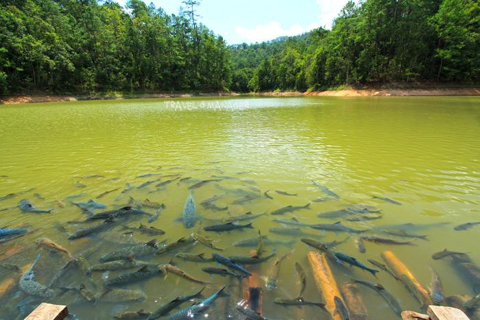 ห้วยบ้านร้างเป็นเขตอภัยทานจึงมีปลาอาศัยอยู่เป็นจำนวนมาก นักท่องเที่ยวสามารถมาให้อาหารปลาได้