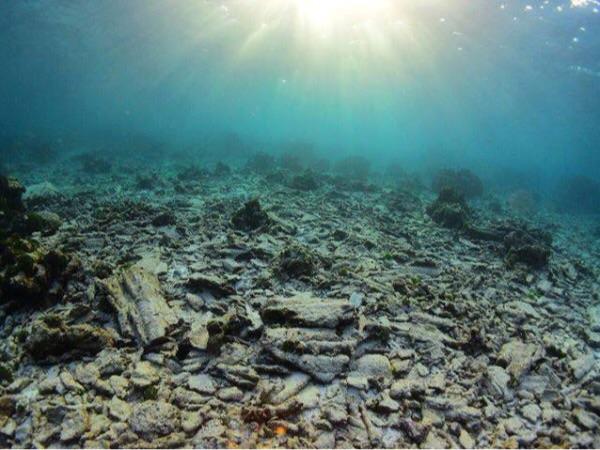 ภากแนวปะการังเสื่อมโทรม โดย ดร.ธรณ์
