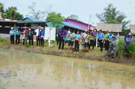 นำร่องทำนาอินทรีย์ในโรงเรียนก่อนขยายผลสู่ชุมชน