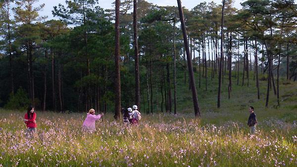 เริ่มทยอยบานเเล้ว ดอกหงอนนาค ณ ภูสอยดาว คาดสวยสะพรั่งปลายเดือนสิงหาฯ