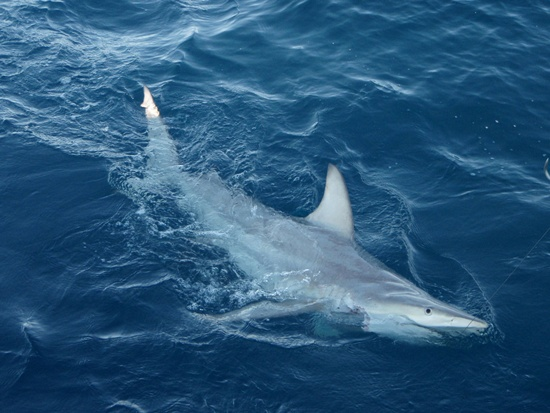 Surfer punches shark to escape attack in Australia