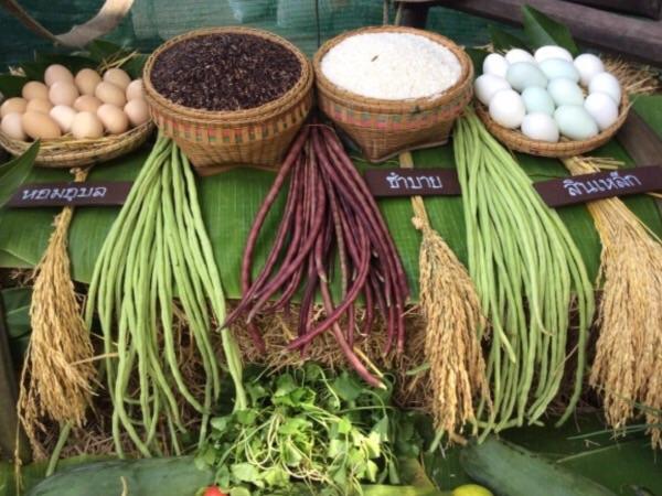 นักวิจัยฝ่ายไม่สนับสนุนเห็นตรงกันว่า เกษตรอินทรีย์ คือทางออกที่ดีที่สุดของไทย  ไม่ใช่  จีเอ็มโอ