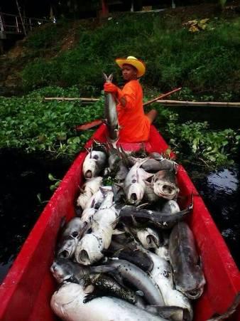 ตายเป็นเบือ! คลองพิจิตรยังเน่า วังปลาเขตอภัยทานสิ้นสภาพ ลอยคอตายแล้วกว่า 2 ตัน(ชมคลิป)